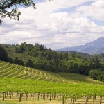 Vista of Mount St. Helena from the vineyard at Terra Valentine