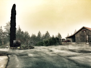 Behrens Family Winery - Winter ground fog