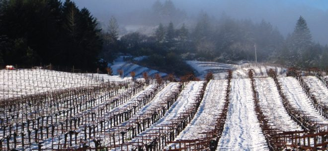 Schweiger Winery - Snow Cabernet Vineyards