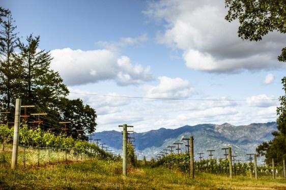 Smith-Madrone Vineyards 2