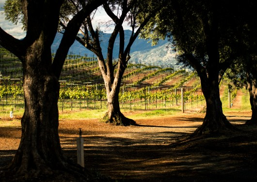 Smith-Madrone Vineyards 3