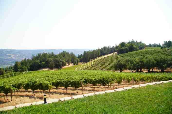 Smith-Madrone Vineyards Views 10