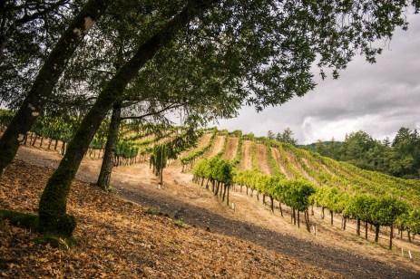 Vineyard 7&8 Vineyard 1