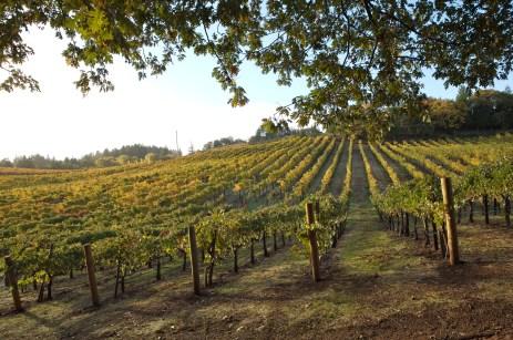 Vineyard 7&8 Vineyard Sunset