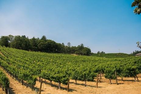 Vineyard 7&8 Vineyards 4