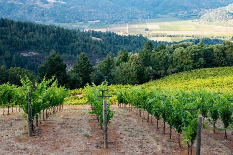 Smith Madrone - Vineyard and Napa Valley