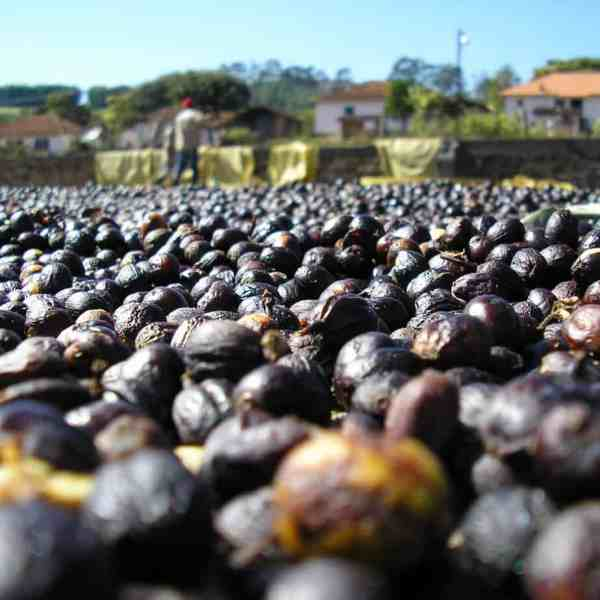 Natural process Brazil coffee beans