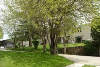 Springvale trees in the spring