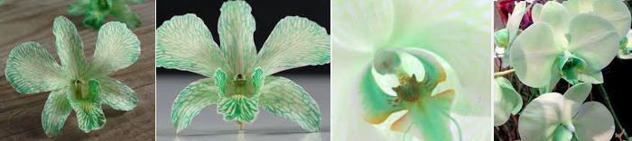 mint-orchids