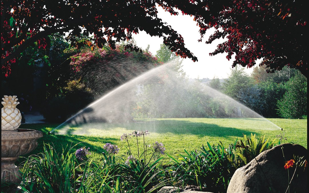Watering Tips to Showcase Your Lawn
