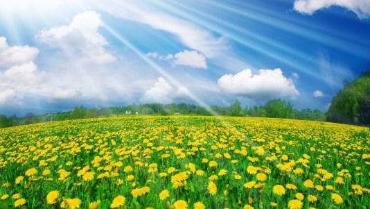sprinkling sunshine services