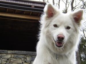 DOGS_24-rowdy