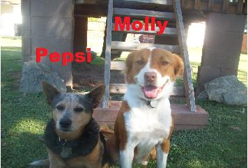 DOGS_271-molly_and_pepsi_paint