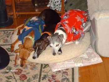 DOGS_273-Three_girls_by_heater_2