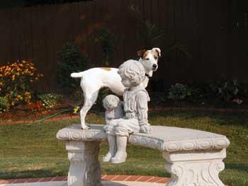 DOGS_275-Sadie