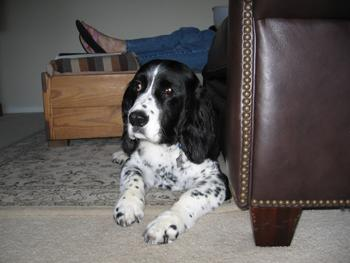 DOGS_324-IMG_0151