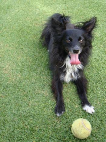 DOGS_435-DSC01495