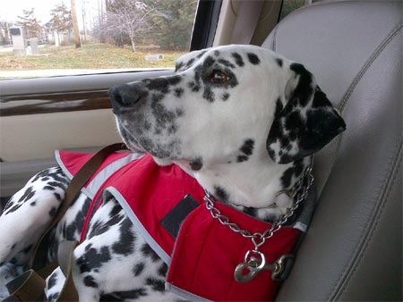 5746-Joey_in_the_front_seat
