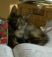 Homeschool-Cat