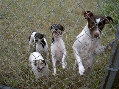 Field Trip Foto Friday: Dog Breeder