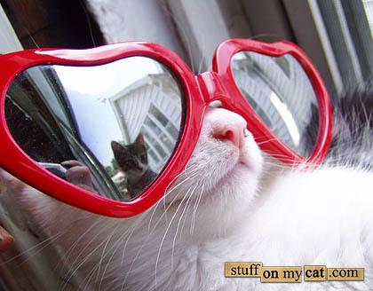 glamour-cat