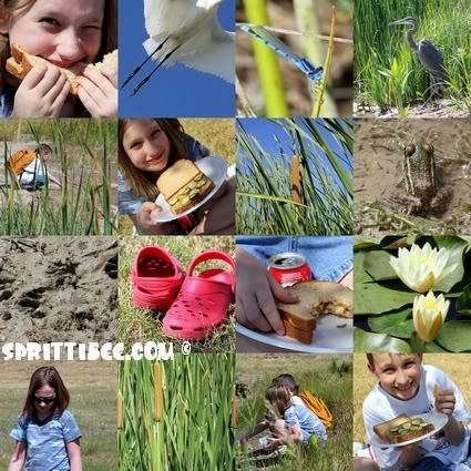 picnic-n-pond-small