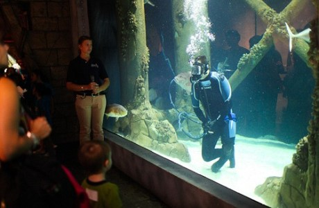 Downtown Aquarium Field Trip – Houston