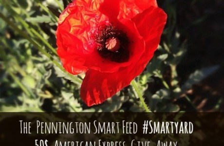 Sponsored Post by Pennington Smart Feed & 50$ Amex Card Give-Away
