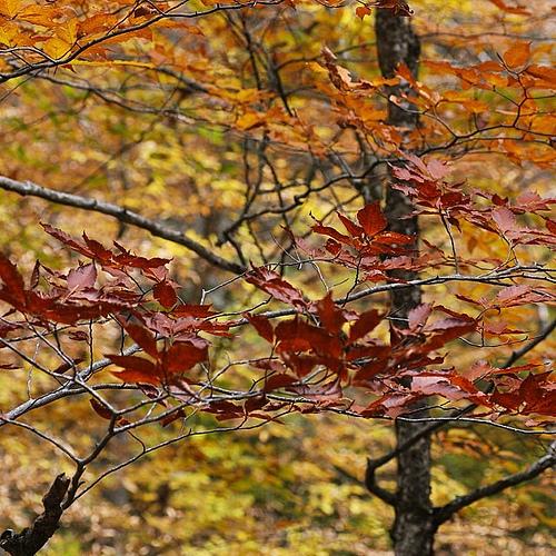 Autumn...the year's last, loveliest smile. ~ William Cullen Bryant