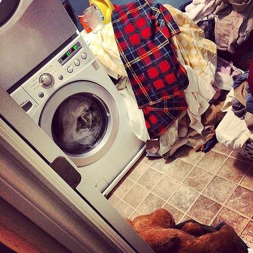 Endless Motion #ringworm #quarantine #laundrypurgatory