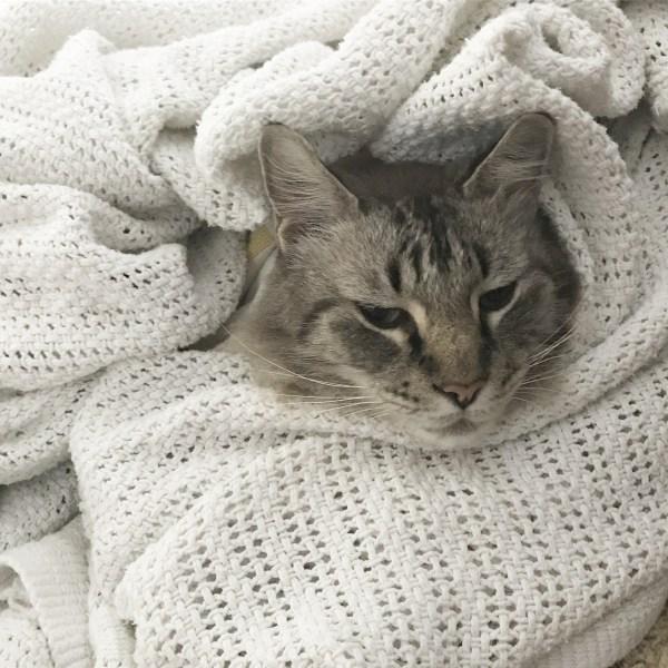 my grumpy kitty @sprittibee