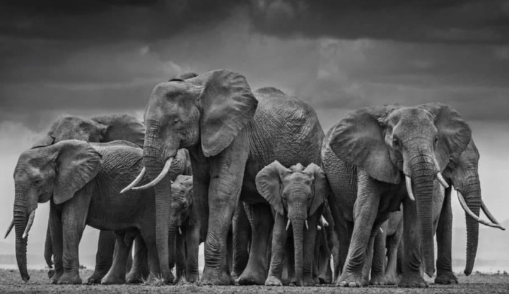 Photo of a group of Elephants backed together in a circle protecting a birthing mother and baby. Jen Hatmaker shares about Elephants protecting each other and how we could do the same. More inspiring posts can be found at www.sprouting-vitality.com #sproutingvitality #mckenzieonthemove