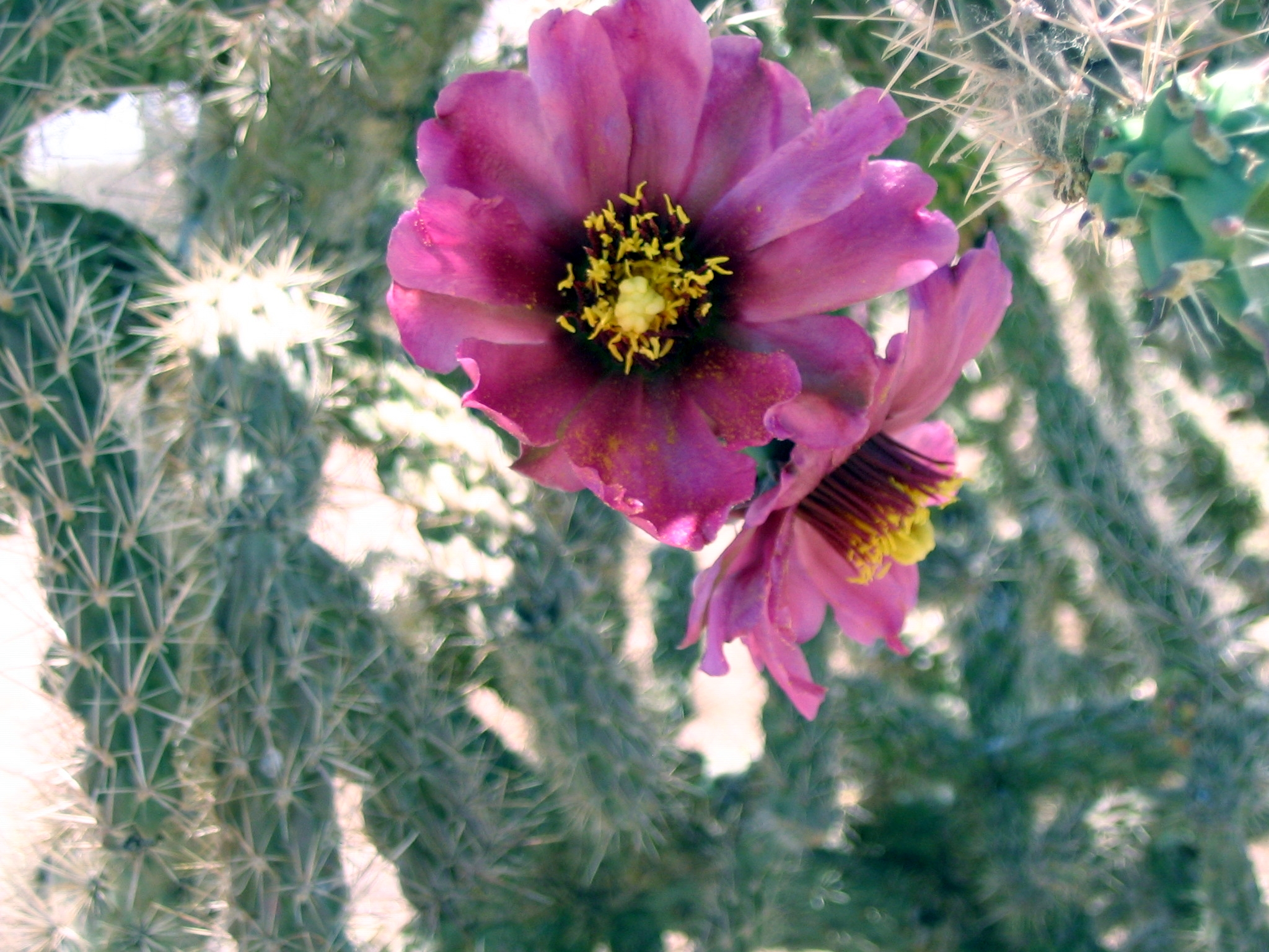 Cactus Flowers Birds And Such Sprouts And Crumbs