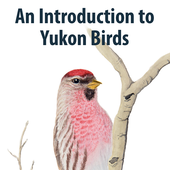An Introduction to Yukon Birds