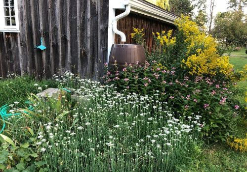 garden-rain-barrel