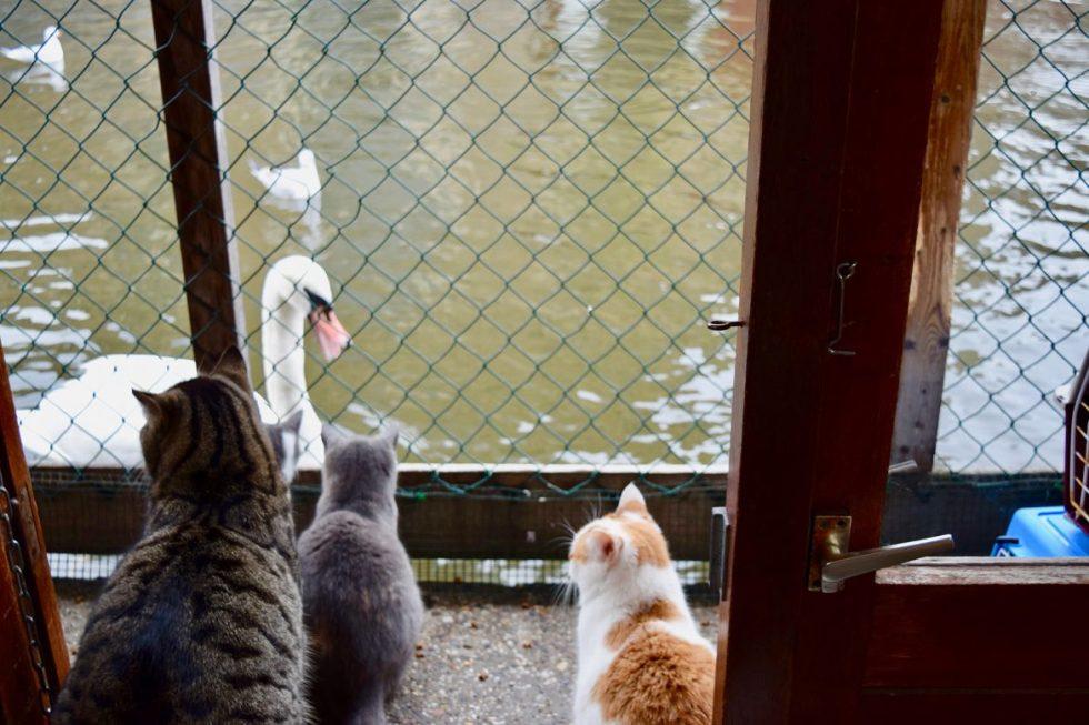 de poezenboot amsterdam netherlands