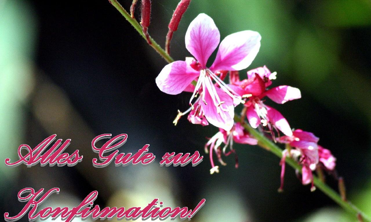 Grußkarte zur Konfirmation pinke Blüte