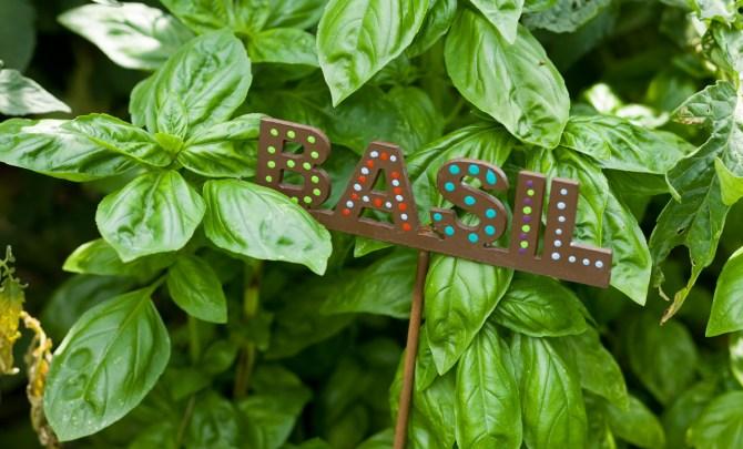 Fresh-Basil-Relish.jpg
