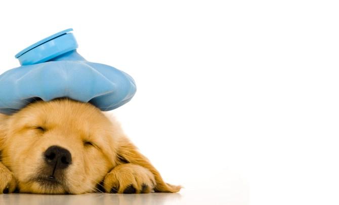 First-Aid-Kit-Sick-Dog-Spry.jpg