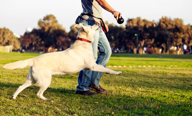 Dog playing in park during summer.