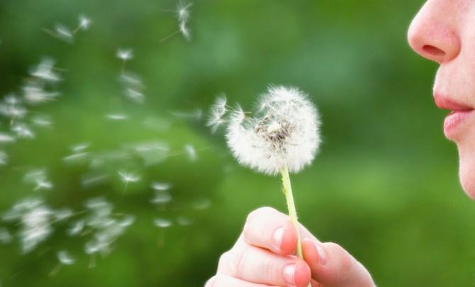 6 spring allergy myths