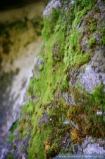 Moss grows on many of the stones that make up the Grotto.