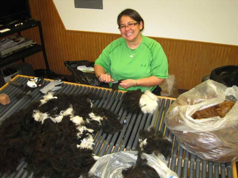 White Violet Center for Eco-Justice is looking for alpaca fiber cleaning volunteers! This is Sister Joni Luna doing just that.