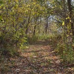 Path-for-forgiveness-web
