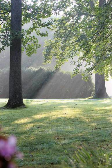 Rays of sunlight through the trees.