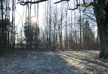 sun-rays-trees-winter-web