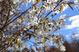 Spring scenery WEB (19)