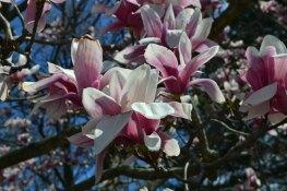 Spring scenery WEB (3)