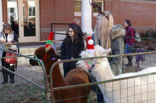Christmas-Fun-at-the-Woods-_-Alpaca-2019-001-WEB