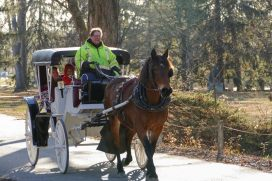 Christmas-Fun-at-the-Woods-_-Carriage-ride-2019-001-WEB